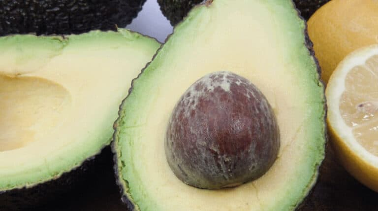 Avocado til skin booster smoothie