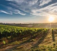 vinmark i italien