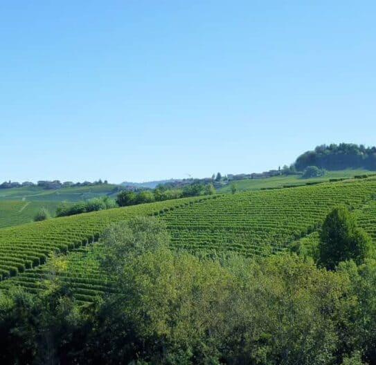 Barolo vinmark