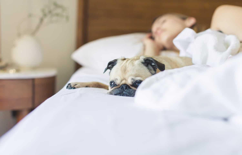 pige der sover i hvid seng med hund