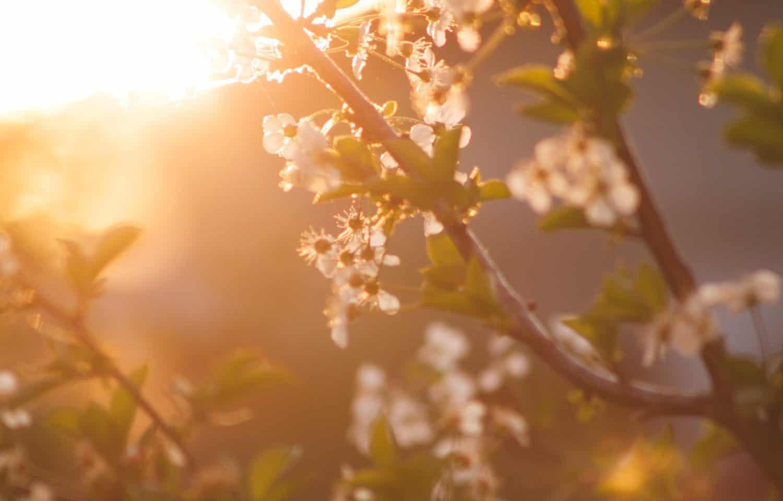 forår er på vej